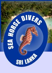 seahorsedivinglanka